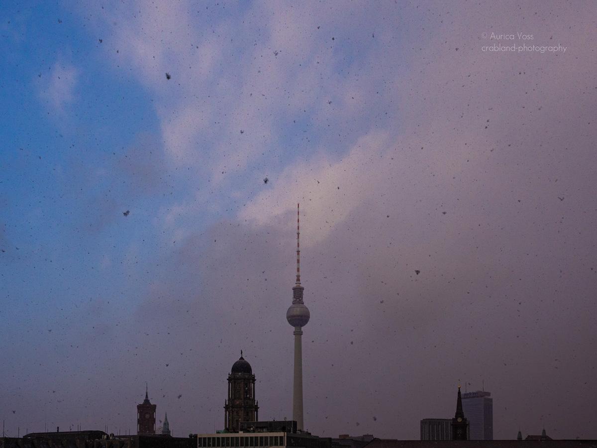 Berliner Fernsehturm und Skyline im Winter mit Schneeflocken