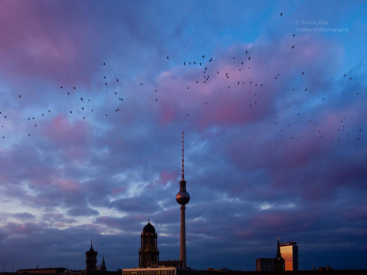 Berliner Fernsehturm und Skyline im Sonnenuntergang mit Wolken und Vogelschwarm