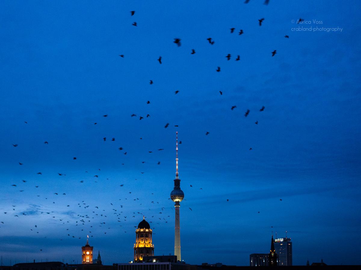 Berliner Fernsehturm und Skyline in der blauen Stunden mit Vogelschwarm